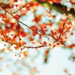 Vivez le printemps en Asie à bord d'une Croisière de Luxe