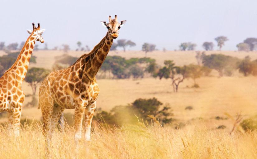 Le Cap en Afrique du Sud avec Oceania Cruises