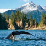 Partez pour l'immensité sauvage de l'Alaska avec Seabourn
