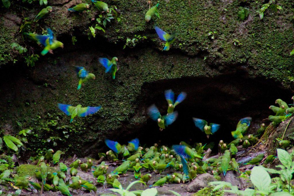 Croisière haut de gamme sur l'Amazone