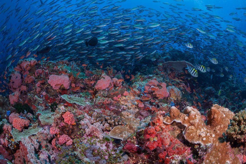 Monde sous-marin de l'île de Komodo