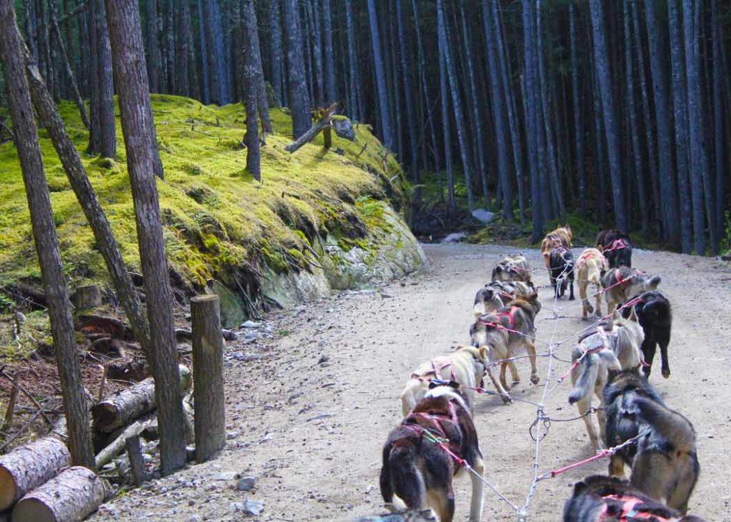 Croisière en Alaska - excursion chiens de traineau