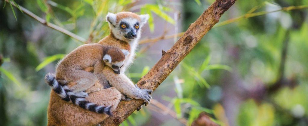 Croisière de luxe à Nosy Be, Madagascar