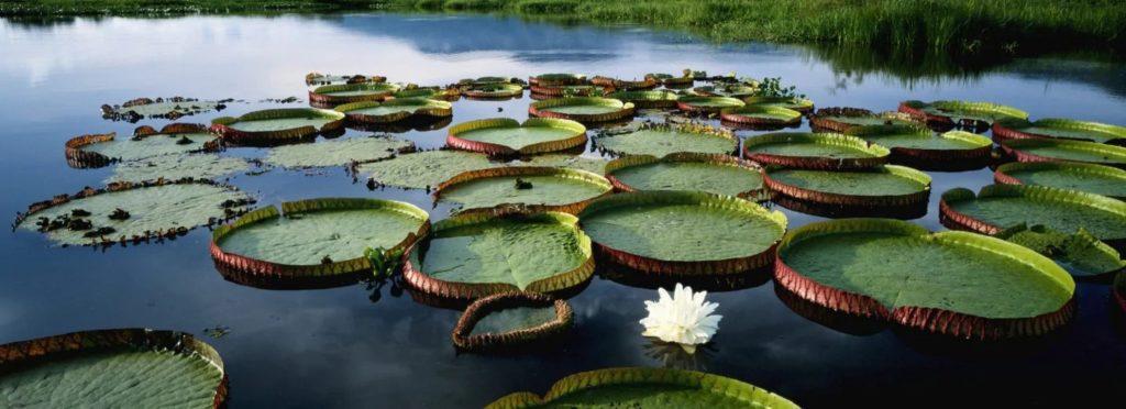 Croisière de luxe Seabourn - Iquitos, la perle de l'Amazonie