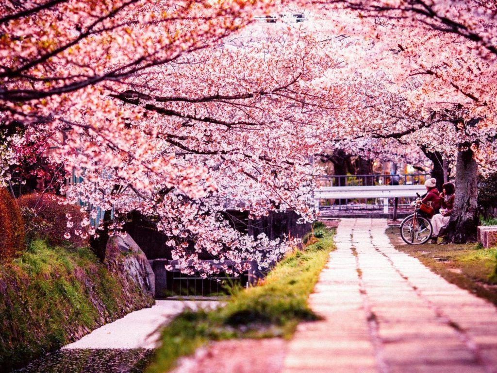 Croisières au Japon durant le printemps