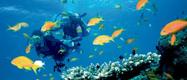 Activité plongée sous-marine avec Crystal Cruises